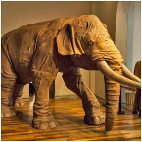elefante pupuya
