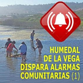 HUMEDAL DE LA VEGA ALARMA SOCIAL